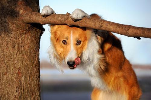 диета собак