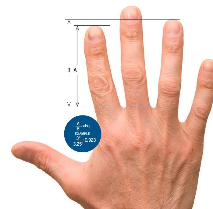 men-finger-ratio