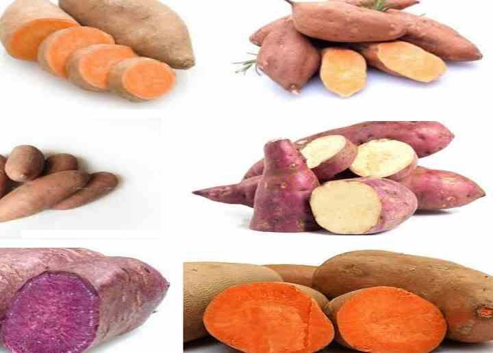 Сладкий картофель (Батат) цвета