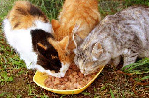 диета кошек